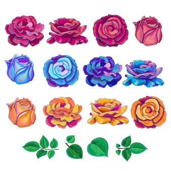 Collection de roses multicolores