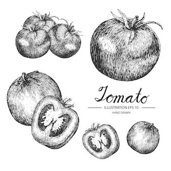 Collection de tomates à la main
