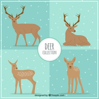 Collection Deers
