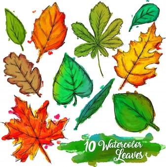 Collection feuilles d'aquarelle