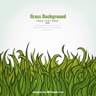 Contexte à la main d'une herbe verte décorative