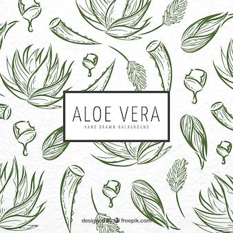 Contexte d'esquisse d'Aloe vera