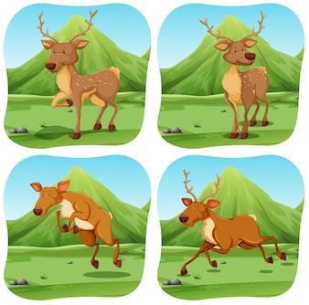 Deers dans quatre illustrations de scènes différentes