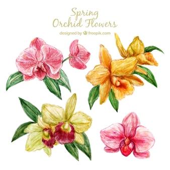 Dessinés à la main des fleurs d'orchidées