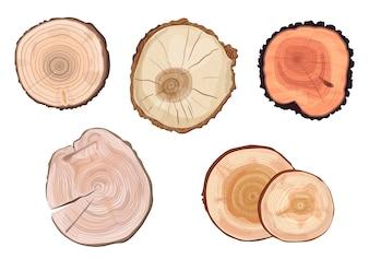 Différents types d'anneaux d'arbres