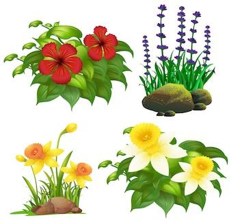 diff rentes fleurs t l charger des photos gratuitement. Black Bedroom Furniture Sets. Home Design Ideas
