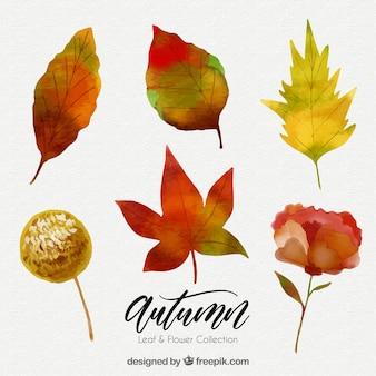 Ensemble d'aquarelle automne feuilles