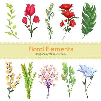 Ensemble d'éléments décoratifs floraux