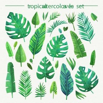 Ensemble de feuilles tropicales d'aquarelle