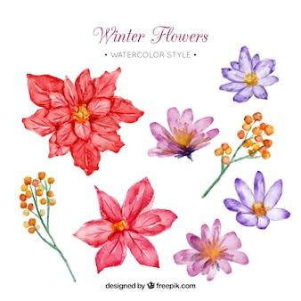 Ensemble de fleurs d'hiver à l'aquarelle