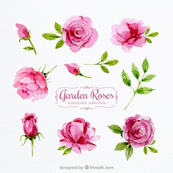 Ensemble de roses aquarelles