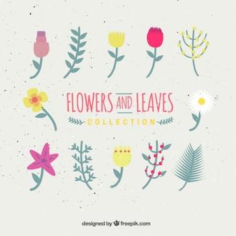 Fleur et feuilles Collection