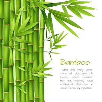 Fond de bambou réaliste