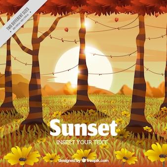 Fond de grumes avec le soleil au coucher du soleil
