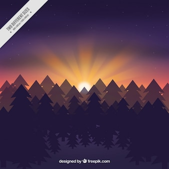 Fond de la forêt au coucher du soleil