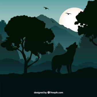 Fond de loup hurlement la nuit
