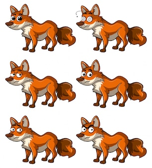 Fox avec différentes expressions faciales