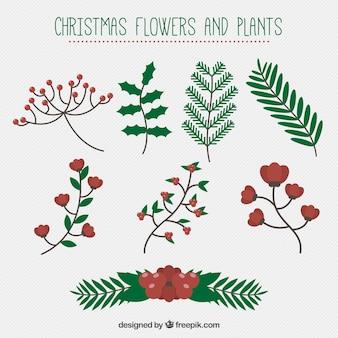 Grand ensemble de fleurs et de plantes de Noël
