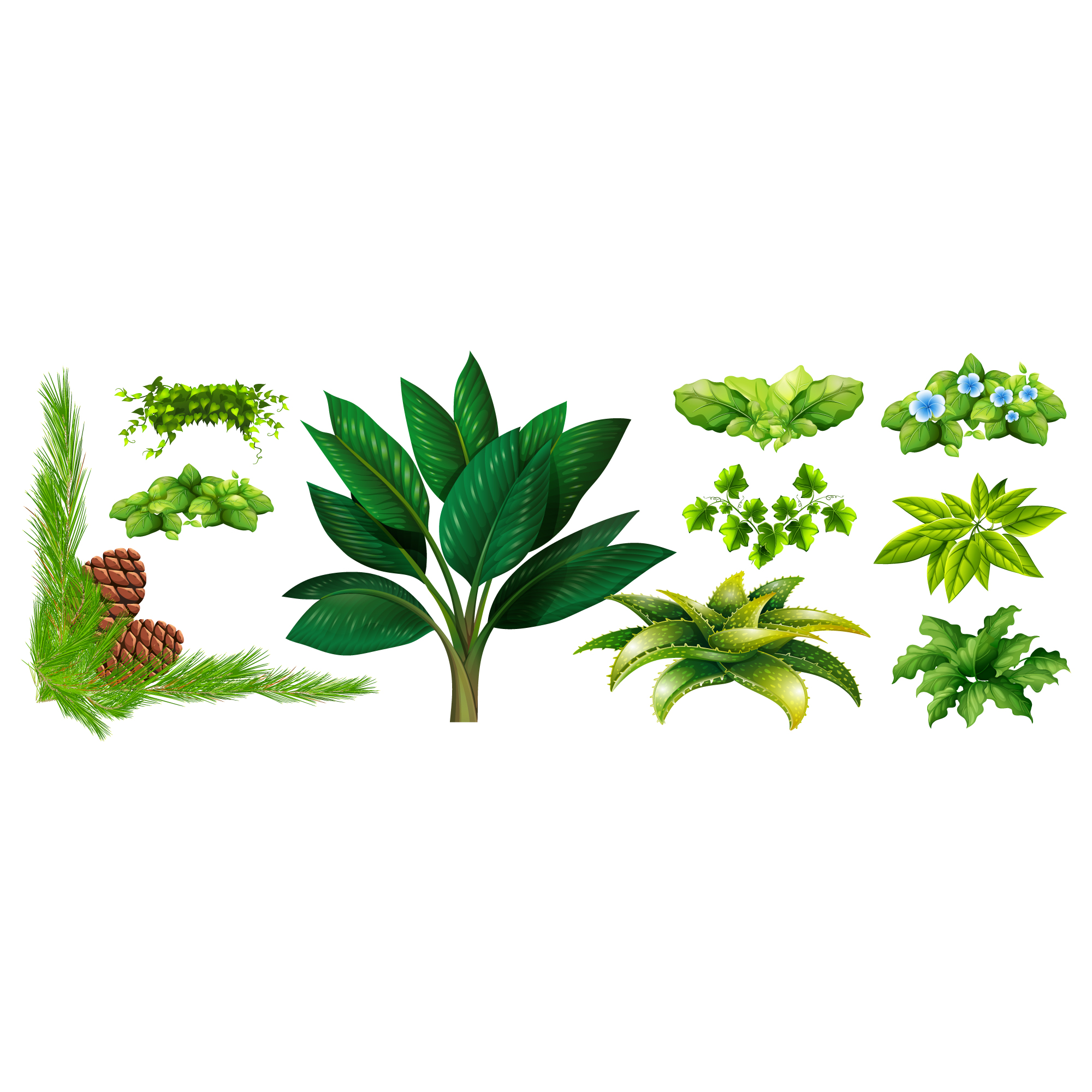Green leaves collection