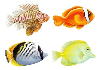 Illustration des quatre poissons sur un fond blanc
