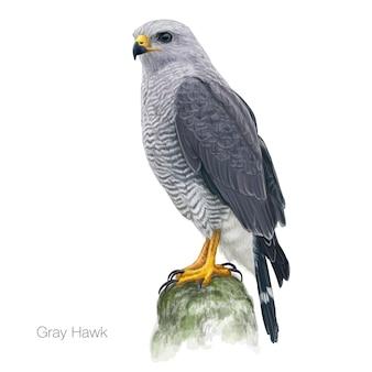 Illustration dessinée à la main par un faucon gris