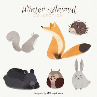 Jolie renard avec d'autres animaux de la forêt d'aquarelle