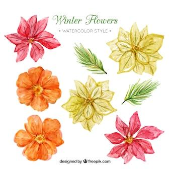 Lot de fleurs d'hiver à l'aquarelle