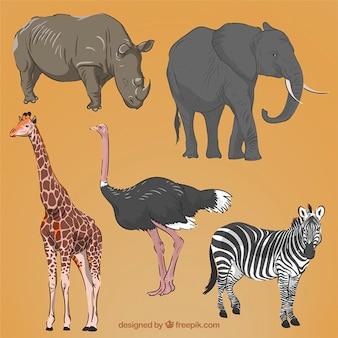Main réaliste animaux africains dessinés