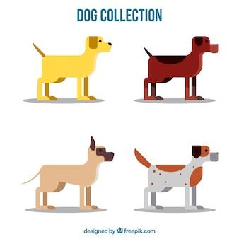 Pack chien dans la conception plate