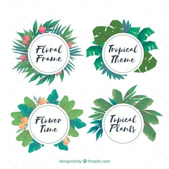 Pack de quatre cadres d'aquarelle florale