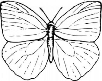 Papillon à 2
