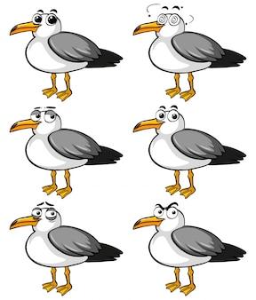 Pigeons aux différentes expressions faciales