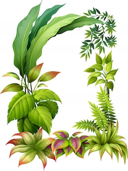 Plantes feuillues