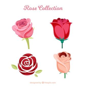 Plusieurs roses avec différents types de dessins
