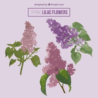 Printemps fleurs lilas paquet