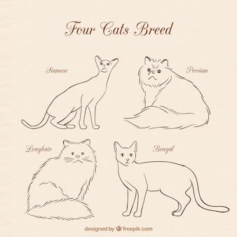 Quatre chats se reproduisent