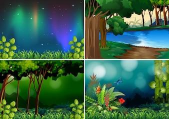 Quatre scènes de forêt à la nuit