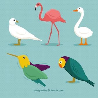 Races d'oiseaux