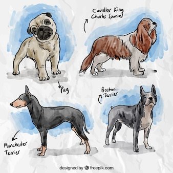 Races de chiens peints à la main
