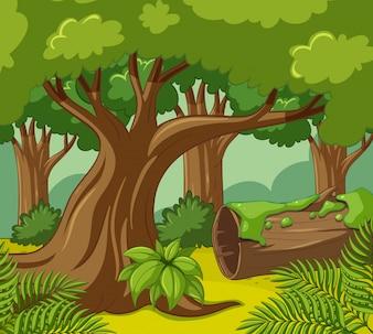 Scène forestière avec de nombreux arbres