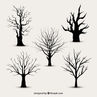 Silhouettes d'arbres sans feuilles