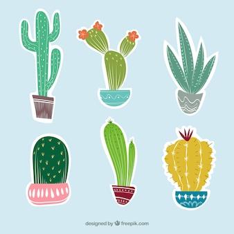 Six cactus différents