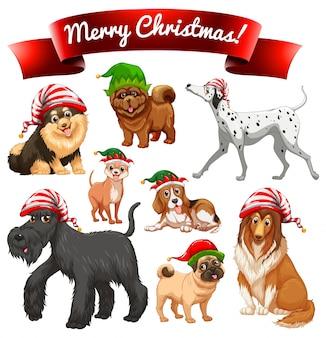 Thème de Noël avec des chiens dans les chapeaux elfes