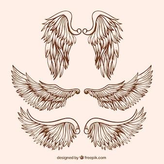 Une variété d'ailes réalistes