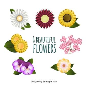 Variété de belles fleurs