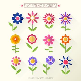 Variété de fleurs dans le style plat