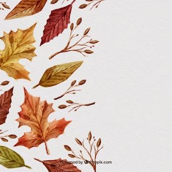 Varitey d'automne feuilles d'automne
