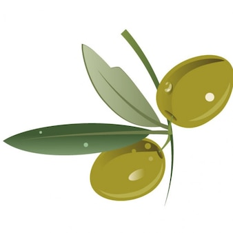 Aceituna verde con hojas