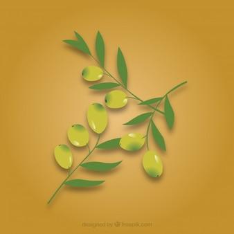 Aceitunas hojas de la rama de paquete de vectores