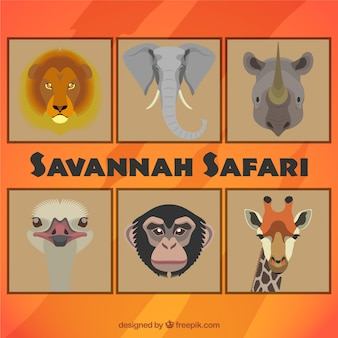 Animales de Safari en la Savannah